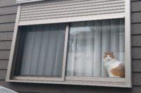 記事タイトル「猫とコタツで丸くなりたい」のサムネイル画像